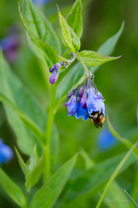 Blue Bells n Bumble Bee