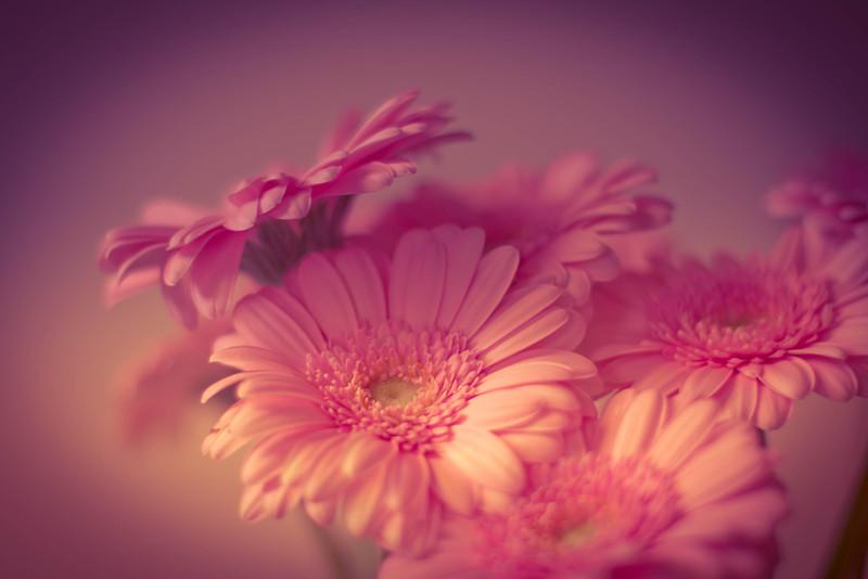_MG_3355flowers
