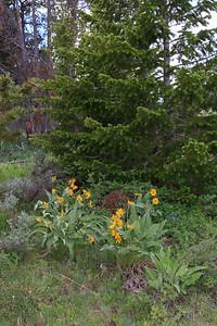2011_07_03 Wyoming 160