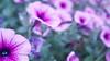 _1010408local flowers