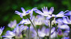 GF2flowers-1090356SchoberPhotography