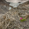 Dwarf Fireweed at Worthington Glacier