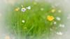GF2flowers-1090348SchoberPhotography