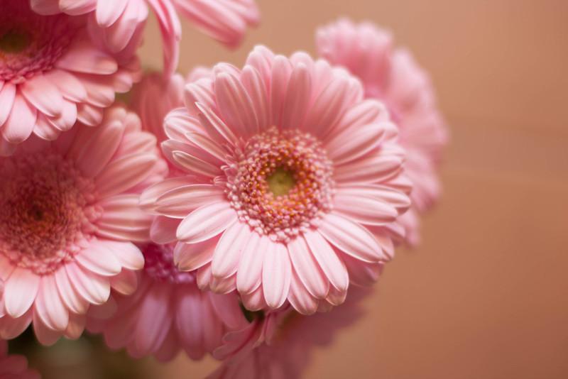 _MG_3349flowers