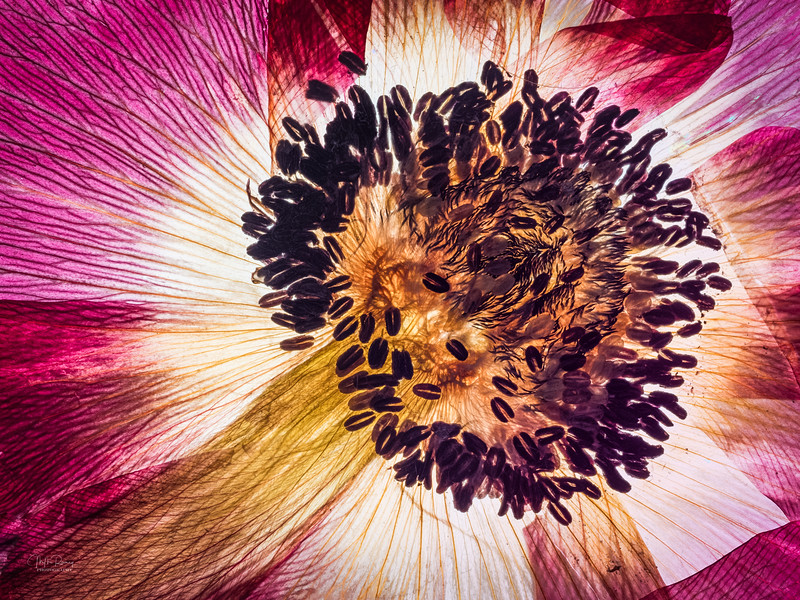 Dried Beauty  I