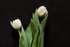 _MG_3373flowers