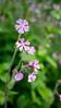 GF2flowers-1090337SchoberPhotography