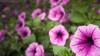 _1010410local flowers