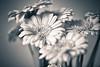 _MG_3361-Editflowers