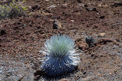 2012_05_31 Haleakala 015