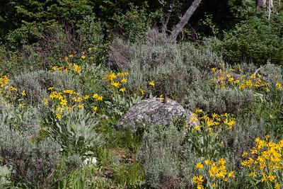 2011_07_07 Wyoming 046