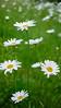 GF2flowers-1090336SchoberPhotography