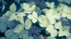_1010407local flowers-2