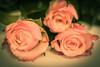 _MG_3374flowers