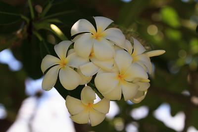 2012_06_11 Island of Hawaii 108