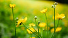 GF2flowers-1090351SchoberPhotography