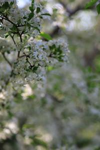 2013_05_12 Spring Flowers 011