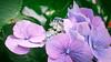 _1010402local flowers
