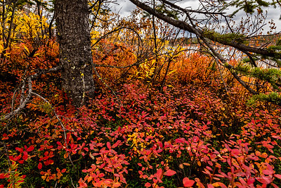 Alaska Fall Ground Color
