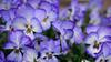 GF2flowers-1090363SchoberPhotography