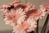_MG_3362flowers
