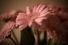 _MG_3357flowers