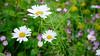 GF2flowers-1090339SchoberPhotography