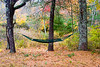 <center>Hammock<br><br>Glocester, Rhode Island<br><br>Evil things, hammocks are. I have never been able to get into one.</center>