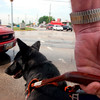 Ben Johnson waits at the intersection of State and Stone Streets to cross with his new guide dog Dot.<br /> Photo Ben French