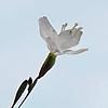 210607_Flora15