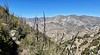 Burned trees from the 2009 Station Fire<br /> Ascending Stone Canyon Trail, up Mt. Lukens<br /> February 24, 2021