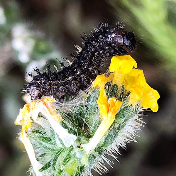 Caterpillar feeding