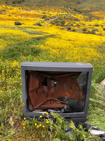 An incongruent sight:  a rusting TV sits amid a valley full of beautiful Lasthenia gracilis, aka Yellow-Ray Goldfields, blooms.  How the TV made it out into the wilderness is a mystery.