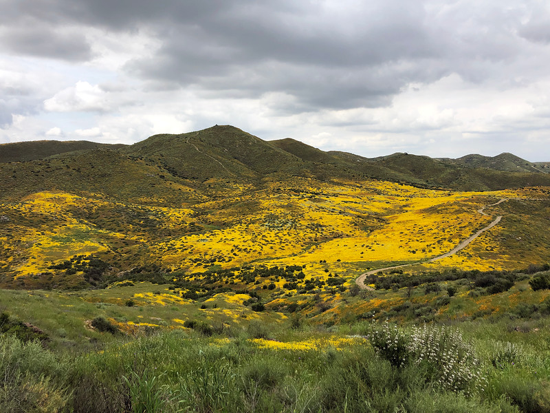 A huge valley full of millions of Lasthenia gracilis, aka Yellow-Ray Goldfields, blooms.  View looking northwest.