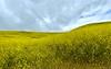 Chino Hills<br /> April 21, 2021