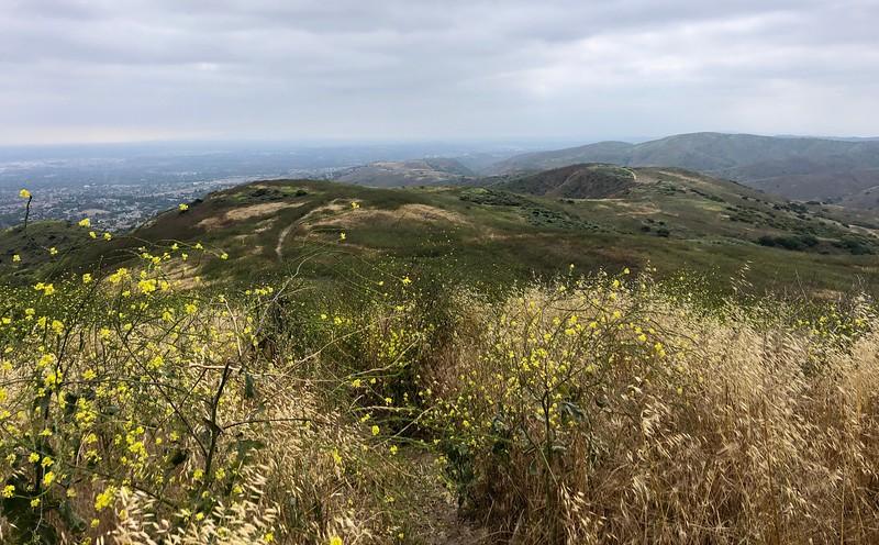 Summit of San Juan Hill, looking west<br /> Chino Hills State Park, San Bernardino County, California<br /> June 1, 2019