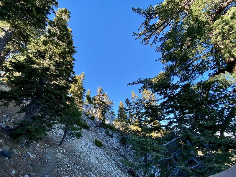 3 T's Trail