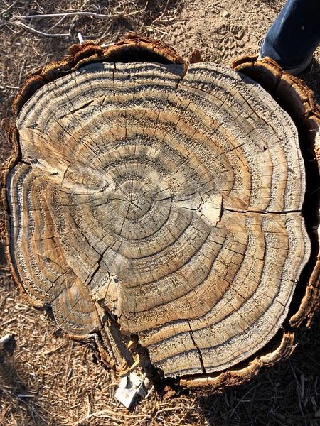 Big Pine, California