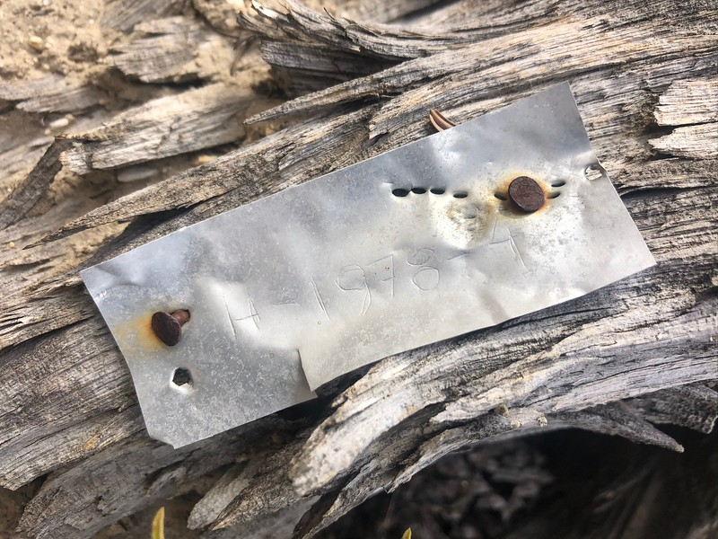 Metal tag of ancient bristlecone pine tree