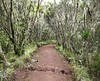 Marangu Trail cloud forest at the base of Kilimanjaro<br /> Photo: (CC BY-SA 3.0)
