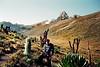 Mt. Kenya, our destination<br /> Strange plants have adapted to the high altitude. Lobelia telekii (left) and Giant Lobelia (right).<br /> June 7, 1994