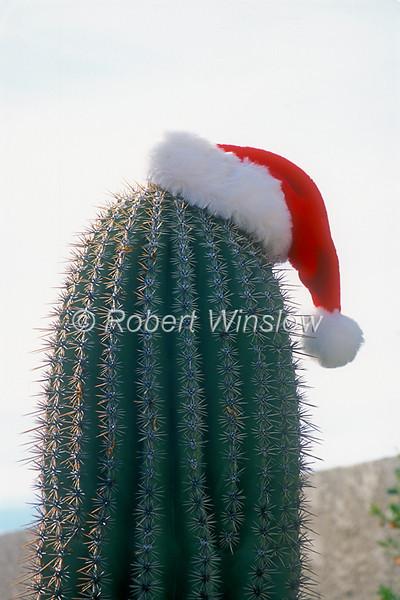 Santa Hat on a Saguaro Cactus, Tucson, Arizona, USA, North America