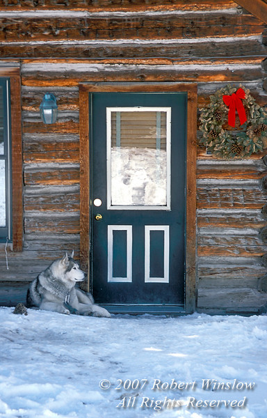 NoPR, Dog at Doorway, Winter, Holiday Season, Ouray, Colorado USA, North America