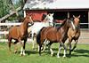 horses5