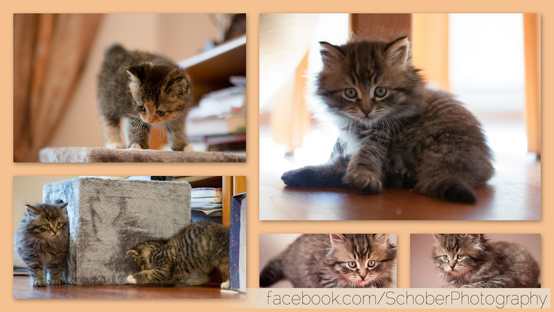 Kitten collage 10 10 2014