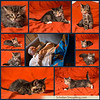 kittencollage-22