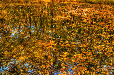 Reflection in a pond. Took this on a hike up Sugarloaf Mountain along the Hudson River.