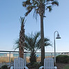 Adirondacks and palms - Myrtle Beach, South Carolina