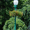 Flowered Lamp Post - Camden, Maine
