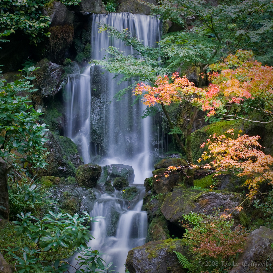 Fall colors and waterfall at the Portland Japanese Garden.